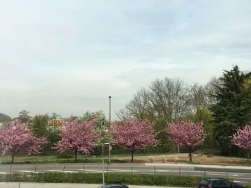 Beeindruckende Aussicht im Frühjahr